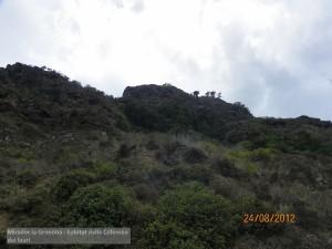 Canarie Mirador la Grimona - habitat della Colomba dei lauri