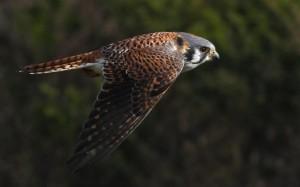 falcon-25024