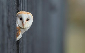 owl-25565