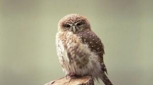 owl-25566